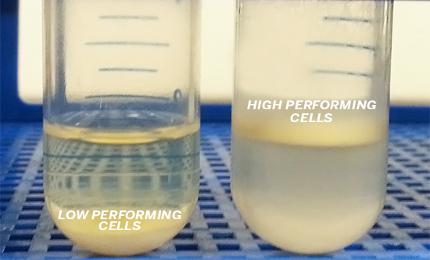 Yeast lipid