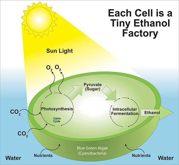 The biorefinery produces ethanol uses the proprietary Direct to Ethanol algae technology of Algenol Biofuels. Image courtesy of Algenol LLC.
