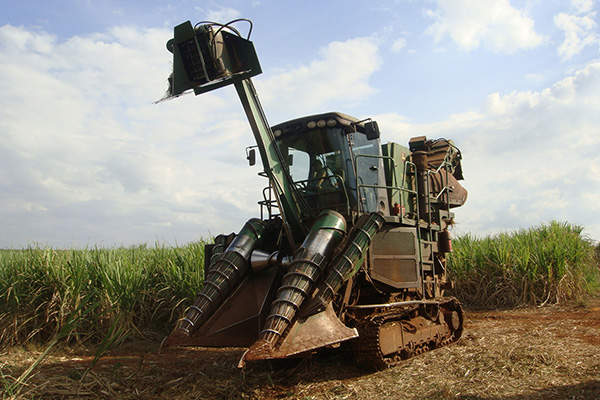 Sugarcane is used as feedstock for first generation ethanol production in Brazil. Image courtesy of Mario Roberto Duran Ortiz.