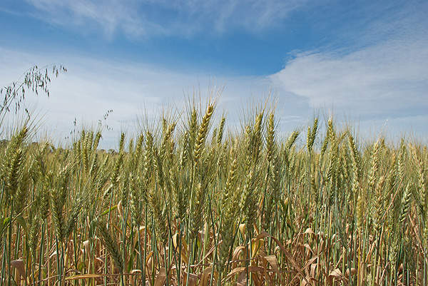 The fertilisers from Morocco are exported to Argentina and Brazil.