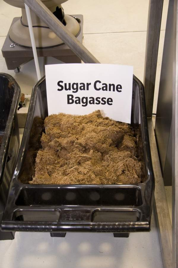 UF / IFAS will operate the pilot plant as a satellite laboratory to research and produce fuel ethanol from inedible plant materials. Image of sugarcane bagasse. Image courtesy of the Institute of Food and Agricultural Sciences – University of Florida.